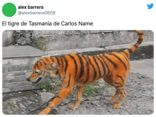 Tigre de Tasmania Carlos Name