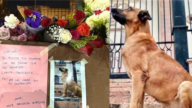 Capitán el famoso perro de Culiacán, Sinaloa