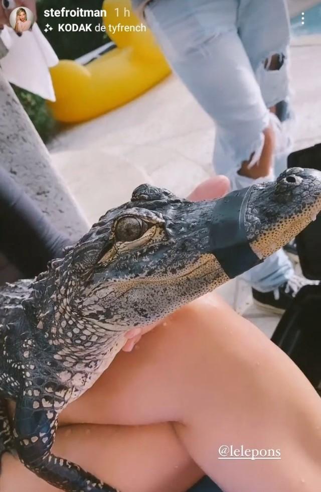 Lele Pons cocodrilo
