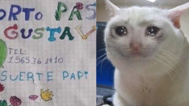 Cv dibujo meme gato