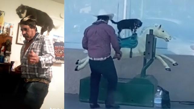 Perrito montando un caballo mecánico video
