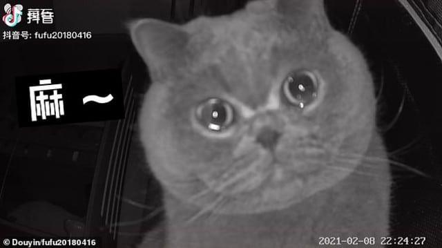 Gato lloró porque lo dejaron solo y lo graban en video