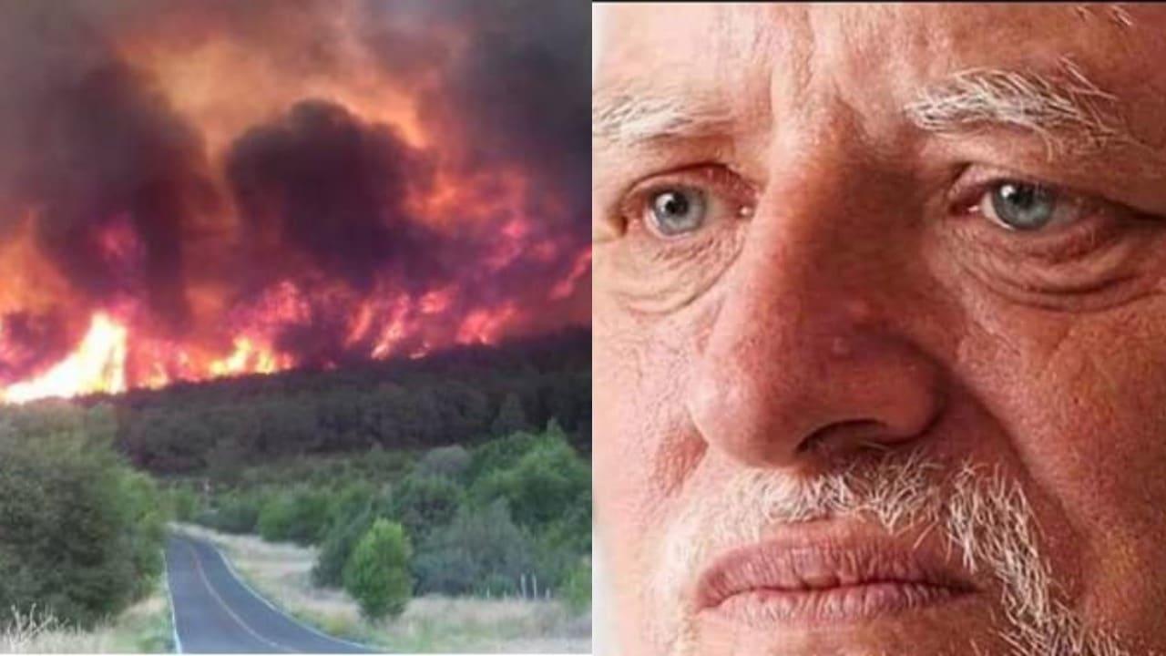 carne asada provoca incendio meme señor