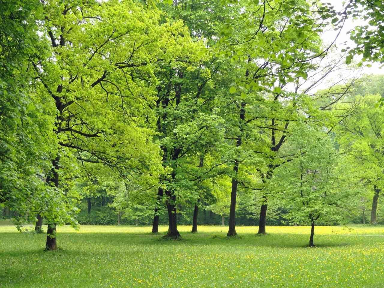 Plantar árboles para vivir