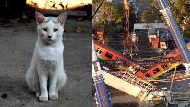 Gato sobrevive derrumbe Línea 12