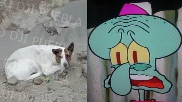 Perrito vuelve a caer en el socavón de Puebla