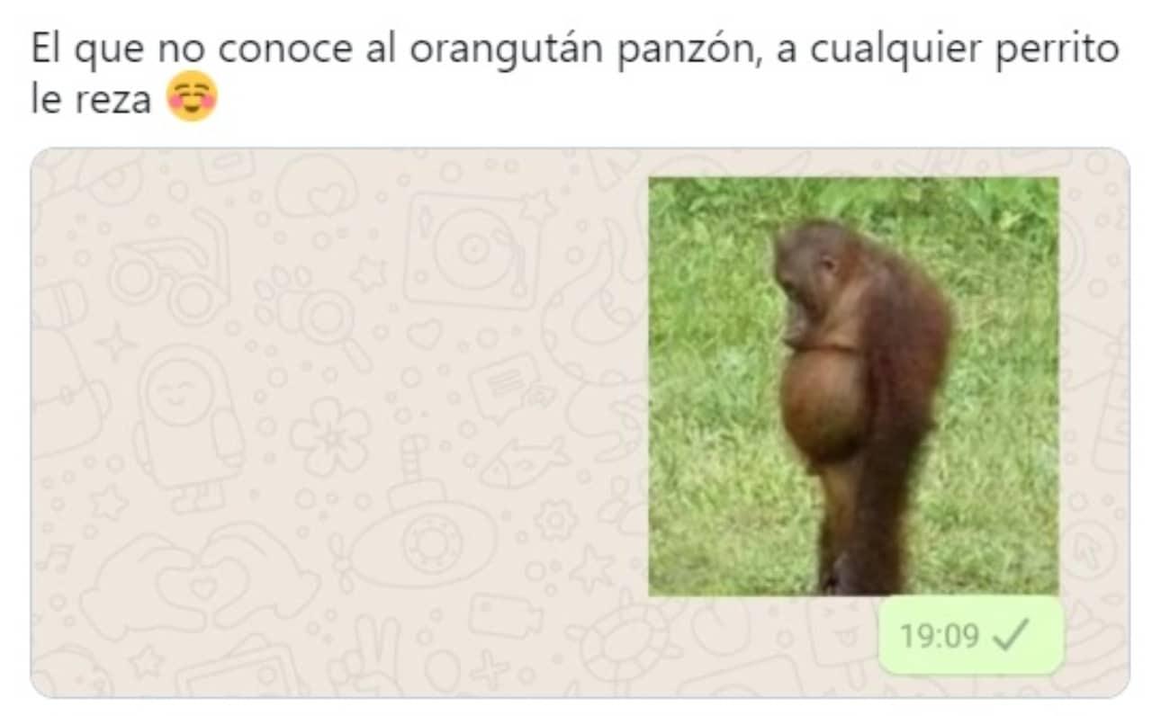 meme del orangutan panson