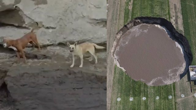 Perros caen al socavón de Puebla y su dueña pide ayuda para rescatarlos