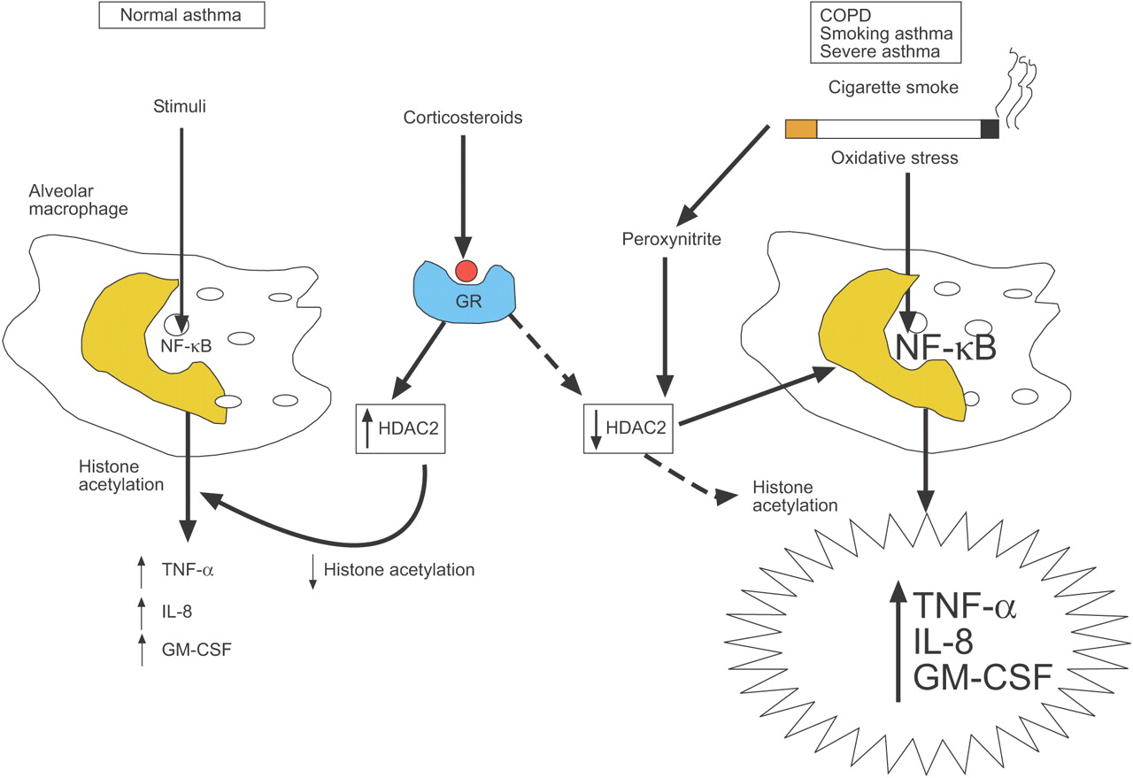 Corticosteroid Effects On Cell Signalling