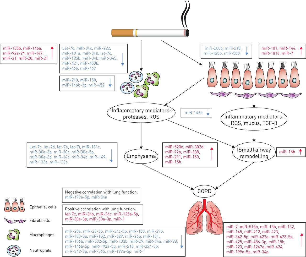 Unravelling The Complexity Of Copd By Micrornas It S A