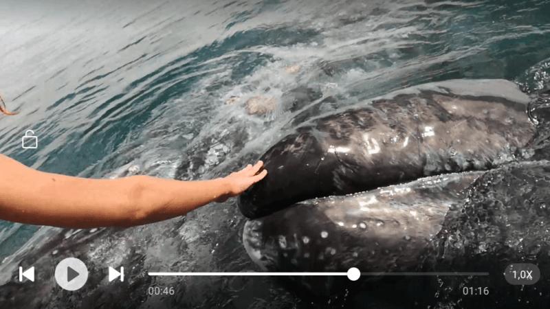 Messico 2018 – giorno #4 – Baja California – Le balene