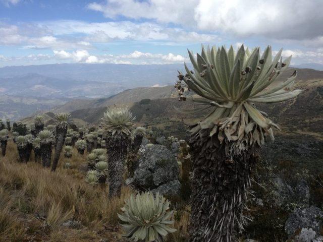 Colombia 2019 - Giorno #2/3 - Trekking coi miracolati a Monguì