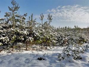 Masurischer Winter. Foto: Aga Viburno CC BY-SA 3.0
