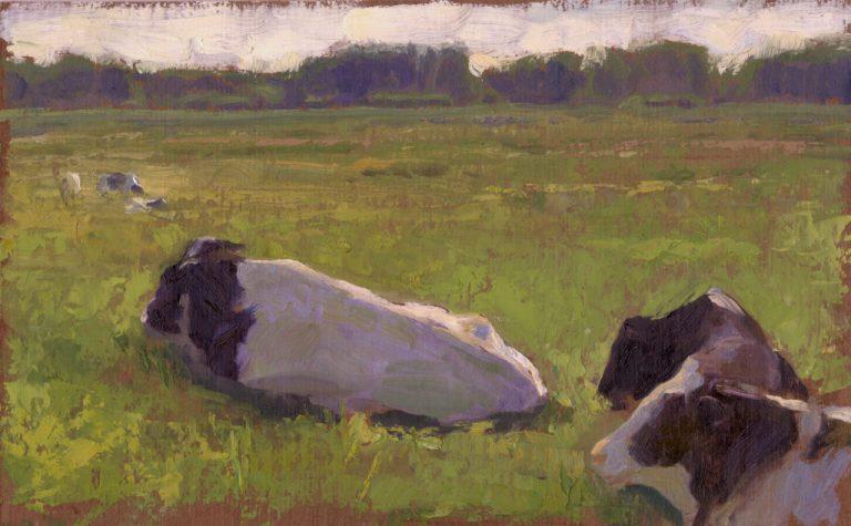Cows near Amsterdam
