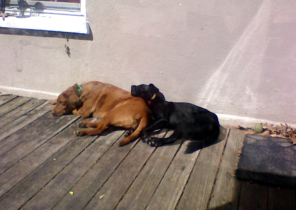 We like to sunbathe and snuggle! Water sux!