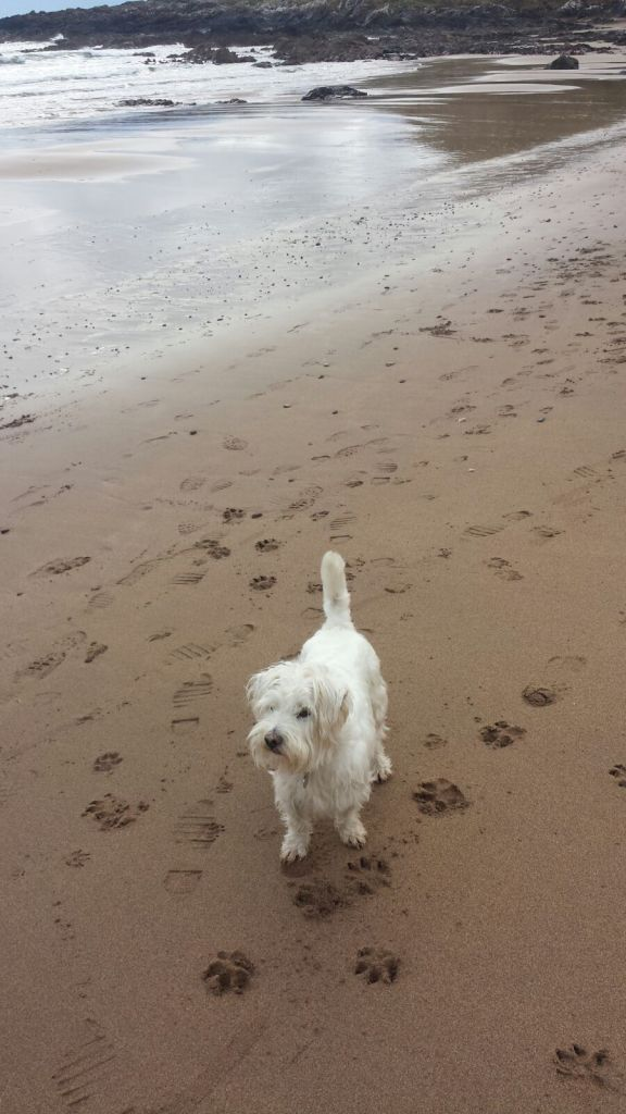 Ernie at Coldingham Bay