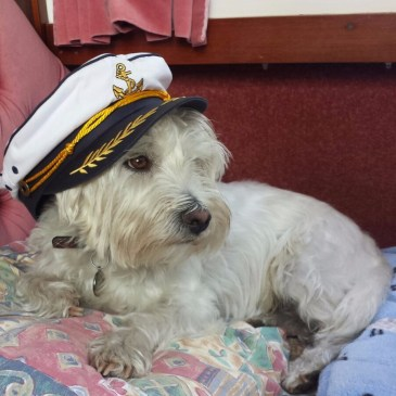 Ernie in a sailor's hat on our canal boat