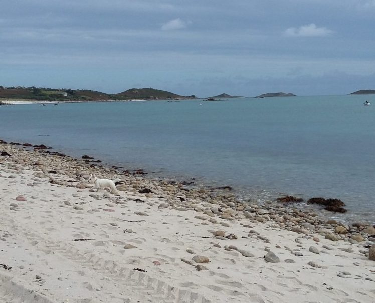 Ernie explores the white sand beaches of St Martins, Isles of Scilly