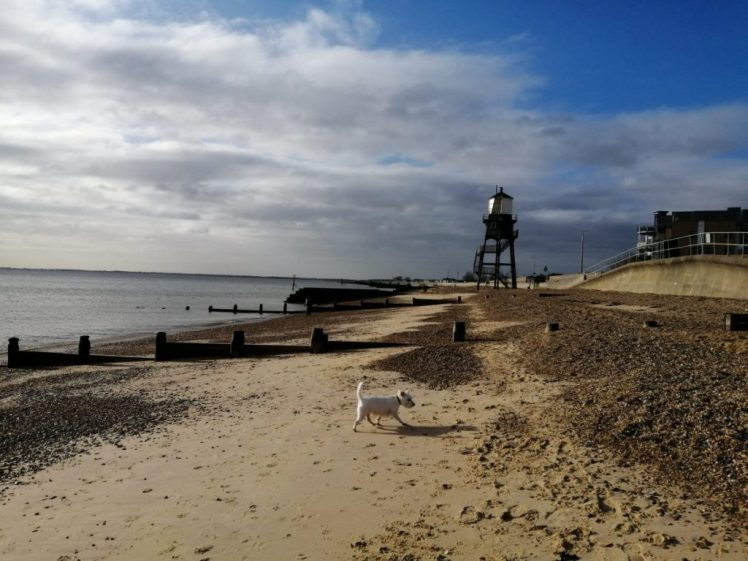 Ernie explores Dovercourt Beach, with the iconic wooden lighthouse behind him