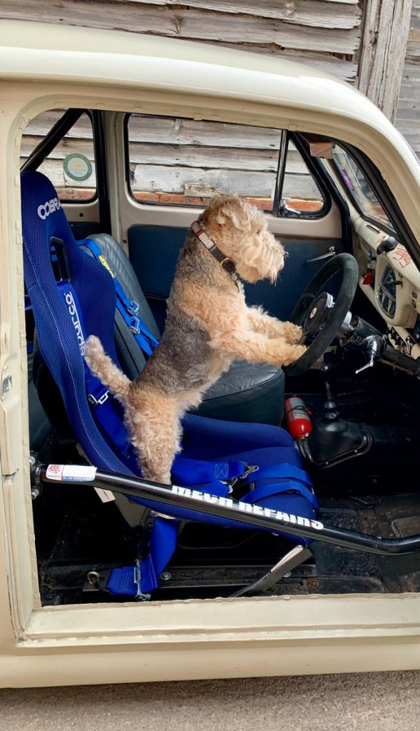 Dog with paws on the steering wheel of a rally car
