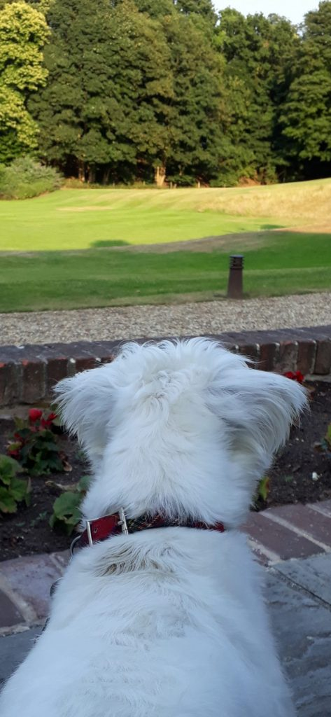 Ernie admires the lawn at Kesgrave Hall