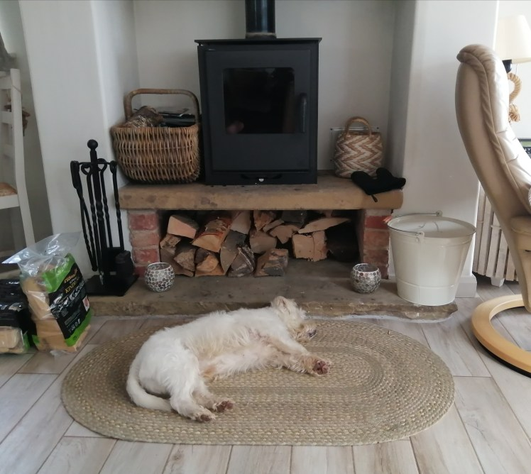 Ernie asleep in front of the wood burner at Beach Cottage, Anderby Creek