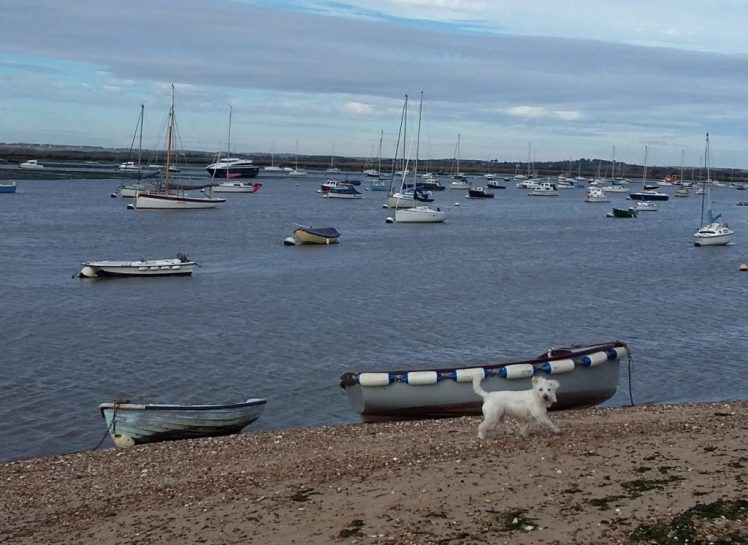 Ernie explores Mersea Island beach, with all its little boats