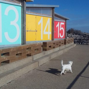 Ernie by colourful beach huts at Shoeburyness
