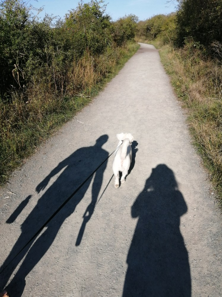 Ernie walks ahead at Wat Tyler Park in Basildon with our shadows behind him