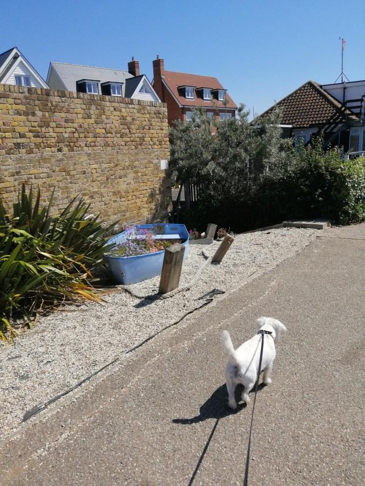 Ernie explores Burnham-on-Crouch