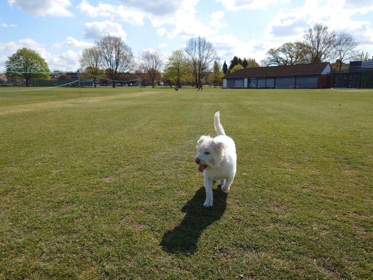 Ernie explores Upminster Park