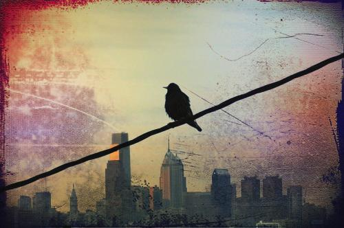 Bird on a wire (© Bill Cannon)