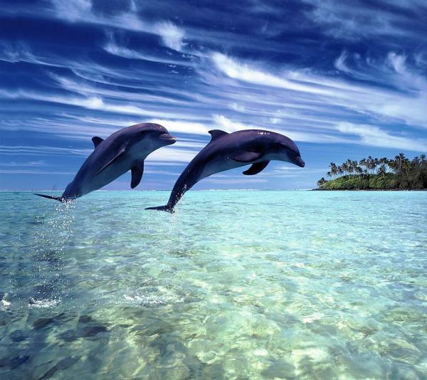Межвидовая коммуникация с дельфинами