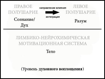Рис. 5. Направление право-левополушарной интеграции.