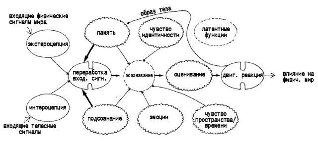 Рис. 2. Основные вариации в функционировании подсистем сознания во время ночного сновидения