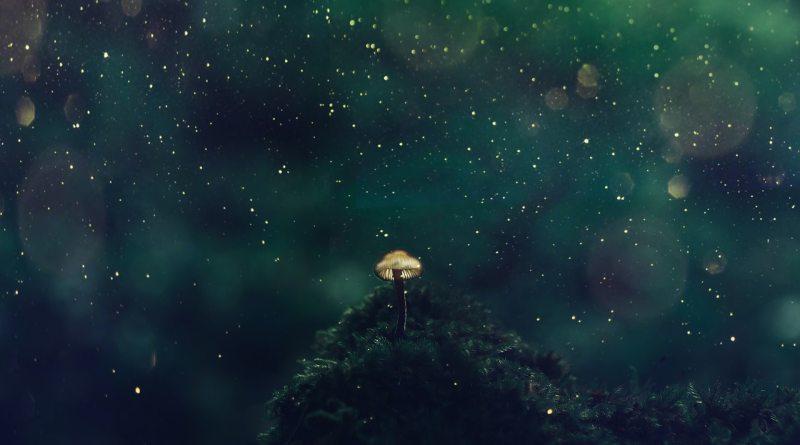Sacred-Scientific Psychedelic Future Erraticus Nicholas Mccay Emre Ozturk