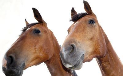 Wie geht Milchreis und was wiegt ein Pferd