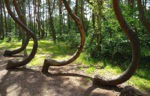 Polonya da Sıra dışı eğri orman, eğri orman hakkında bilinmeyenler
