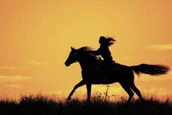 Atçılık ve Antrenörlüğü Mezunları DGS İle Hangi Bölümlere Girebilir