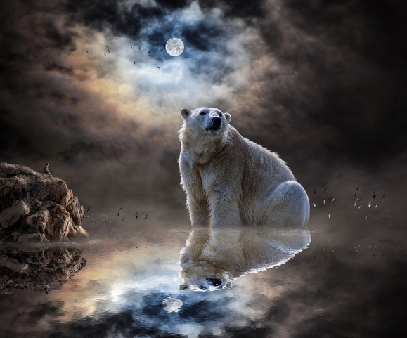 Bear Moon Dreaming