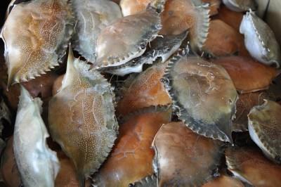 shell-1840194_640