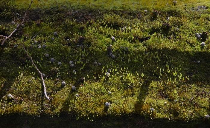 Natur (89)