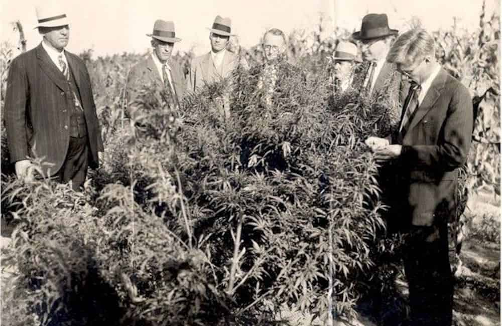 7-ways-people-used-cannabis-in-1930-8