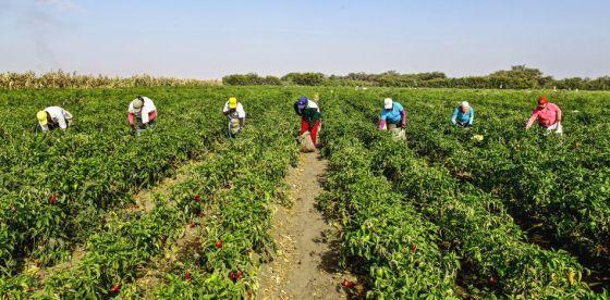 Productores agro autoconvocados en Uruguay: un reclamo pertinente