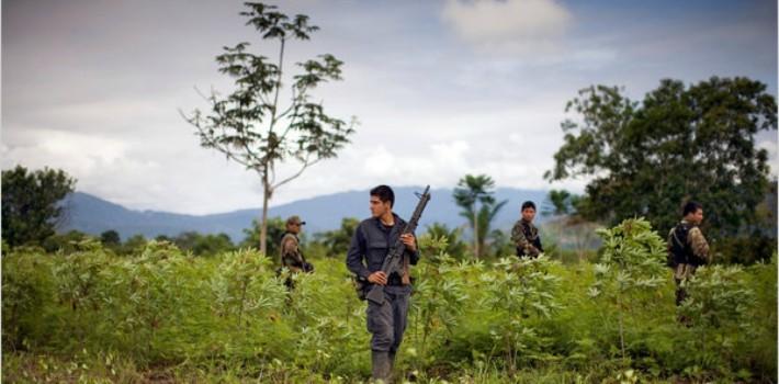 coca plantations