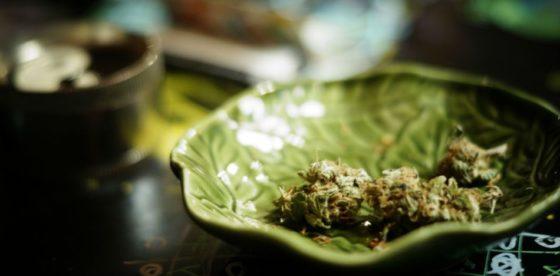 Ciudad de México: candidato a alcalde propone legalizar cultivo personal de marihuana