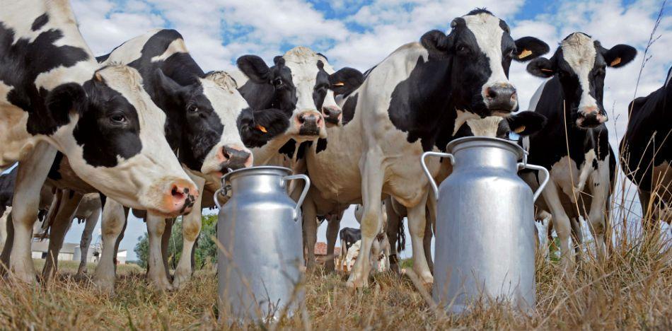 Resultado de imagen para productores leche
