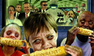 Ma_z_transg_nico_de_Monsanto.jpg