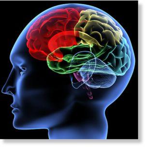 cerebro coloreado