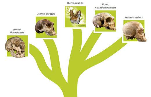 filogenia de las cinco especies humanas